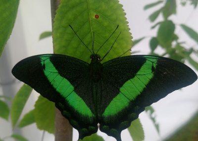 Motyl z zielonymi ozdobami na liścu